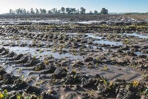 Terre-avec-eau-stagnante-consequence-du-compactage